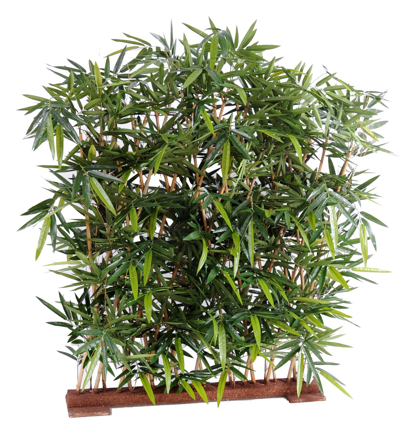 Planorga for Plantes decoratives exterieur